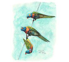 Rainbow Lorikeets on Wire Photographic Print