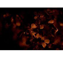 {Night Blossoms} Photographic Print