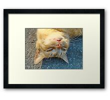 Downunder !!! Framed Print