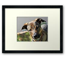 Dude the obsure Framed Print