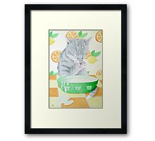 The cat gets the cream! Framed Print