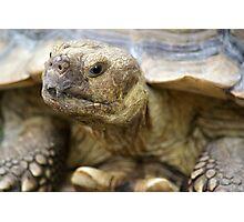 Tortoise Photographic Print