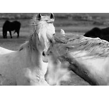Wild Stallions Of The West  Photographic Print