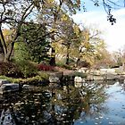 Leaves on Pond, Japanese Garden, Jackson Park Chicago by Erica Lipper