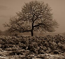 A Lonely Tree by Willem Hoekstra