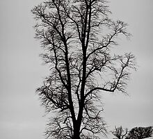 Slices of winter # 5 by clickinhistory