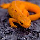 Orange by marilynwood
