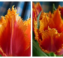 Tulip Diptych by enchantedImages