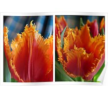 Tulip Diptych Poster