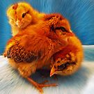 Baby Chicks Love by Doty