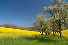 Spring Field by Walter Quirtmair