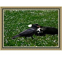 ☆ º ♥ `•.¸.•´ ♥ Crow Feeding Kitten~ Best Friends ☆ º ♥ `•.¸.•´ ♥ Photographic Print