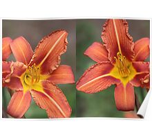 Orange Lilies from left to right or Vice Versa Poster