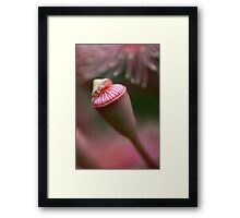 ~ solace ~ Framed Print