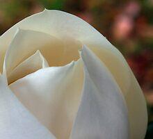 Magnolia by Byron Taylor