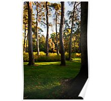 Autumn colours tall trees Poster