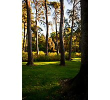 Autumn colours tall trees Photographic Print