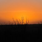 sunset in January 2011 by gabbielizzie
