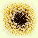 Gerbera detail by ©The Creative  Minds