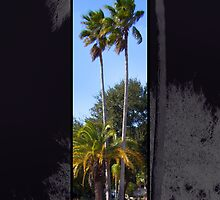 Tall Palms by Ginny Schmidt