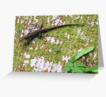 Tree Lizard in Rarotonga Greeting Card