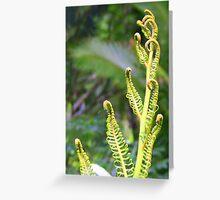 Fern Fronds on Rarotonga Greeting Card