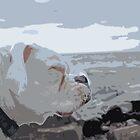 Kota on the Shore by Aaron Bottjen