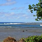 The South Pacific from a Rarotonga Beach by Laurel Talabere