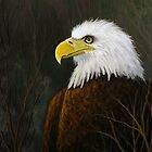 Bald Eagle by Rich Summers