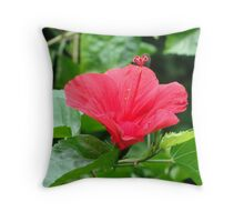 Butterfly Sanctuary 2 Throw Pillow