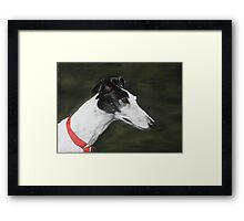 Black and White Greyhound Framed Print