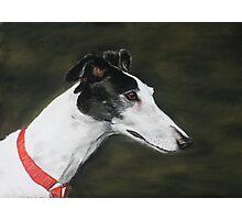 Black and White Greyhound Photographic Print