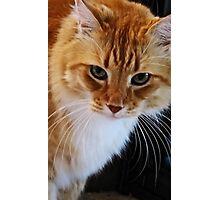 Puss Photographic Print