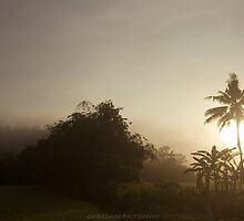 Early morning Fog-Paddy Field by zafrulismail