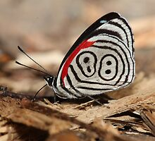 88 Butterfly by Paul Duckett