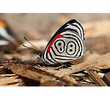 88 Butterfly Photographic Print