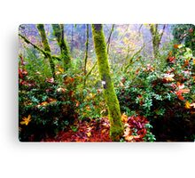 colors of the forest Canvas Print