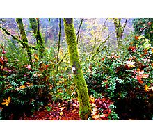 colors of the forest Photographic Print