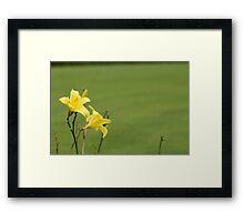 yellow nature 3 - botanic gardens Framed Print