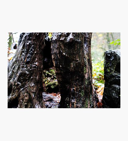 Wet legs Photographic Print