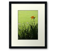 yellow nature - botanic gardens Framed Print