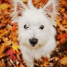 Autumn Leaves by { wetnosefotos.com  }