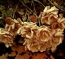 """""""& there they lay ...so forlorn , forgotten """" by Rosehaven"""