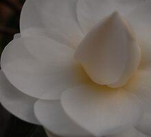 Meringue Bloom by photojeanic