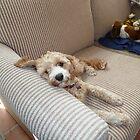 Yes, I'm Very Comfortable Thankyou! by joycee