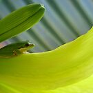 Frog on flora by FrogGirl