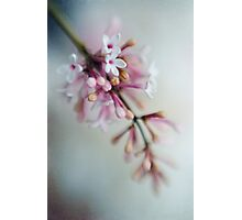 A Little Lilac Photographic Print