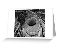 Peacock Feather Back in Time Greeting Card