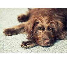 Mulligan Relaxing Photographic Print