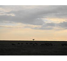 Lonely tree on the horizon Photographic Print